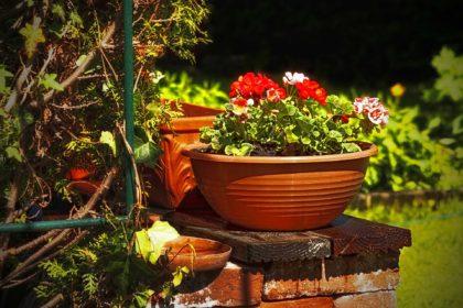 garden-112336_1920